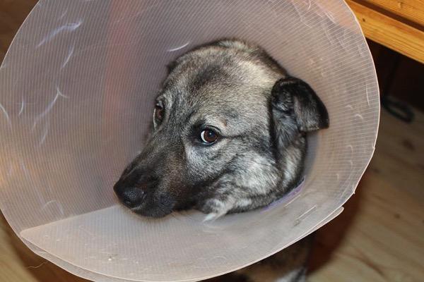 Sick dog 1063663 480